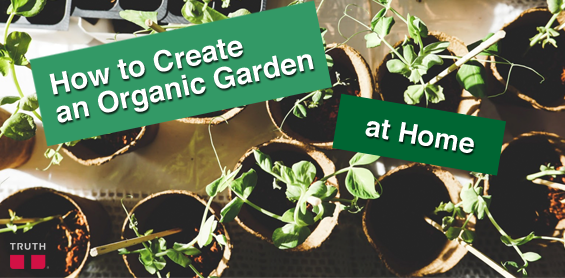 How to Create an Organic Garden at Home